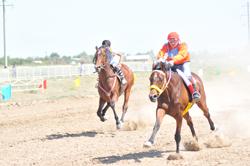 Тяжело лошадкам бегать по жаре